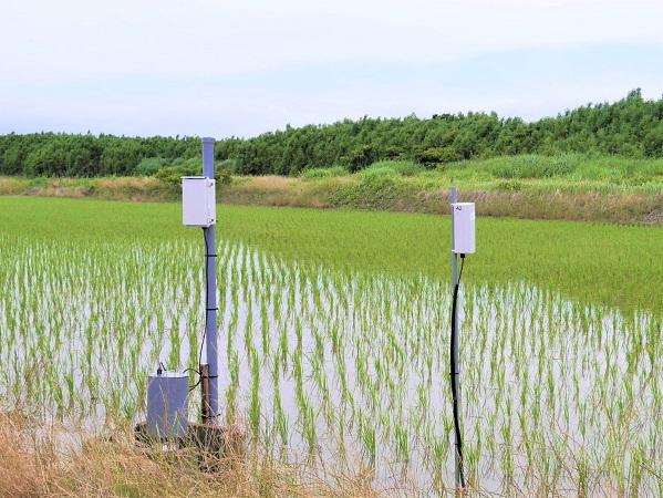 水田管理もスマホで遠隔操作! 米農家の負担軽減に向け実証実験