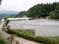 有機栽培への情熱と独自の仕組み、奈良の恵まれた環境が成功の秘訣『奈良県農業法人協会(有限会社山口農園)」