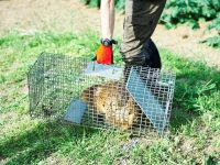 獣害対策の「わな猟免許」はどうやって取るの? ネズミ対策は?