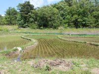 愛知県にもののけの里 ジブリパーク予定地「あいちサトラボ」
