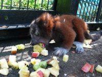 野毛山動物園に聞きました! 動物たちが食べる野菜・果物Q&A