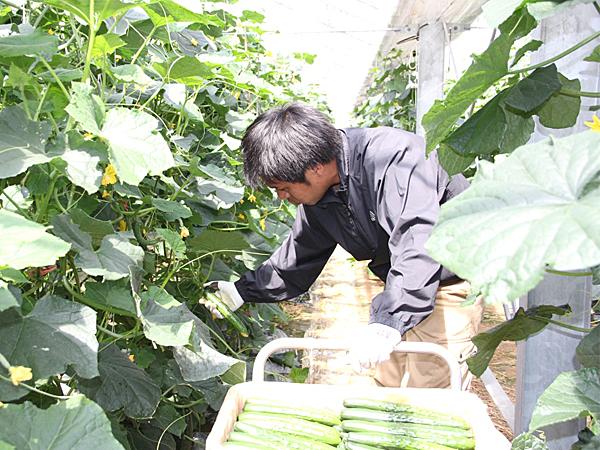 佐賀の地域(市町・JA・生産部会・県)が一体となり新規就農希望者を支援!