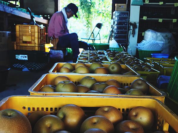 梨の収穫後