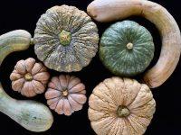 「古来種野菜」とは?伝統野菜の八百屋が語る野菜と種の話【後編】