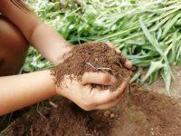 初心者でも簡単!雑草堆肥で土づくり【畑は小さな大自然vol.8】