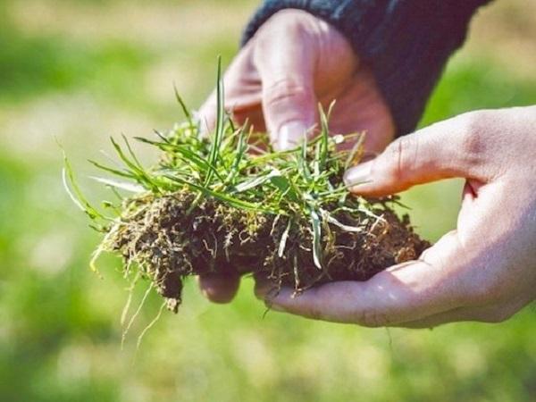 雑草で診断!その土で野菜は育つのか?【畑は小さな大自然vol.7】