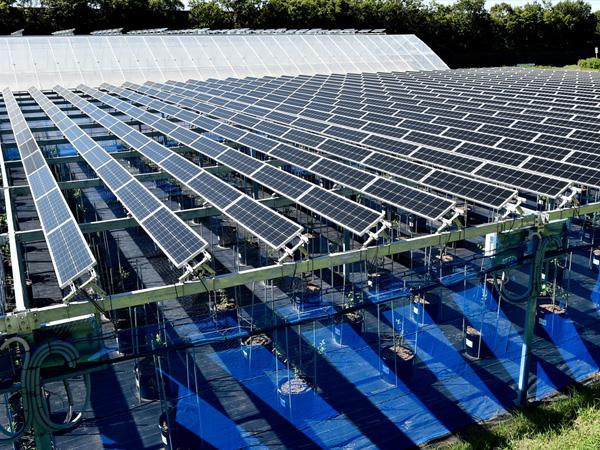 太陽光発電を農業に!? ソーラーシェアリングは農業にも地球環境にもやさしいシステム
