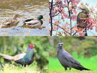 狩猟できる動物は48種に決められている! 後編・鳥類28種