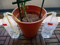 留守中の水やりの失敗原因を究明!簡単な自作で解決?【枯れ専かーちゃんのベランダ菜園】