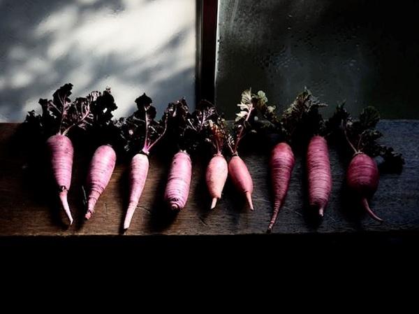 「古来種野菜」とは?伝統野菜の八百屋が語る野菜と種の話【前編】