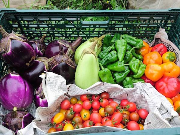 世田谷の住宅街で農業!? 都市部で有機野菜を作る「そらまめ農園」
