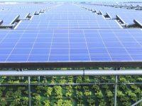 「営農型発電」とは? 耕作放棄地を解消する? メリット、デメリットは