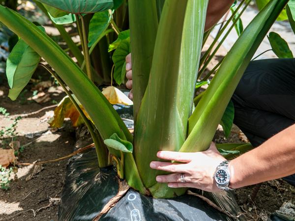 <東京都・東京都中小企業団体中央会助成金採択事業>農業用土壌改良資材『エコカル』で驚くほど元気に作物が育つのはなぜ?
