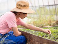 野菜づくりの基本!良い苗の選び方と見分け方