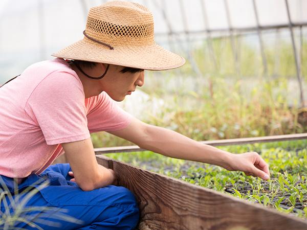 野菜づくりの基本! 良い苗の選び方と見分け方