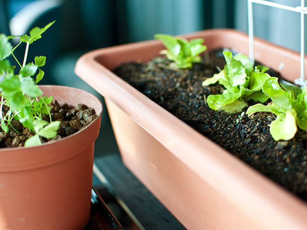 農業初心者におすすめ!家庭でできるプランター栽培