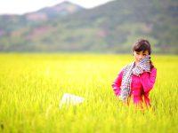 地球温暖化で変わる日本の農業
