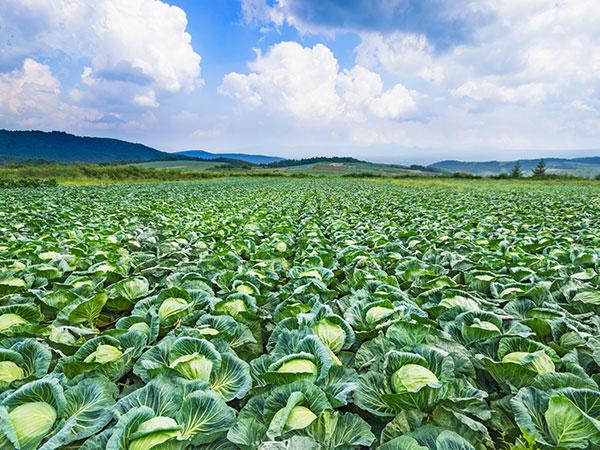 自然農法と有機農法の違いとは? メリットとデメリットを知ろう