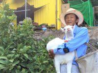 ミニヤギ除草でレモン生産や竹林整備も! 早期退職、ヤギで故郷を再生
