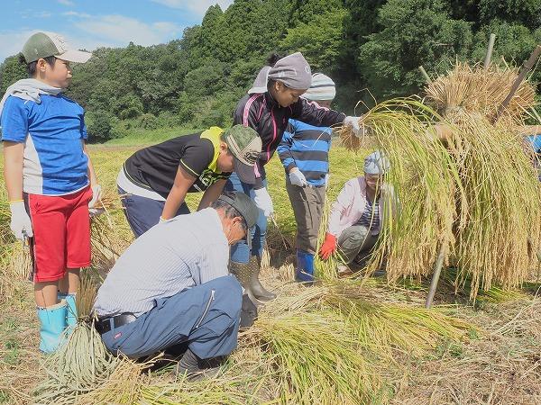 千葉・長南町の廃校リノベ宿泊施設「ちょうなん西小」で稲刈り