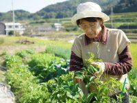 「医福食農連携」とは? 農業関係者の役割、メリットとは?