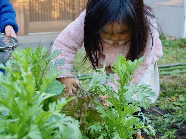 家庭菜園初心者に最適!9月に植える野菜5選【畑は小さな大自然Vol.9】