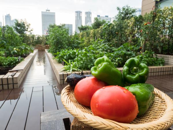 新宿の駅ビルで芋掘り!? 話題の都市型貸し菜園に行ってみた