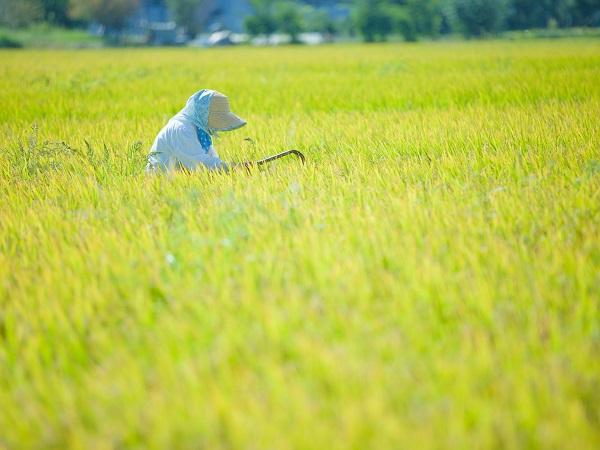 農業景況DIは大幅落下、設備投資は過去最高