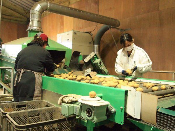 安定性抜群の企業で活躍! 北海道・むかわ町で農作業スタッフ募集