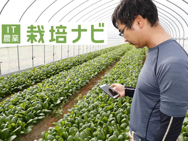 パナソニックの『栽培ナビ』を導入したらどうなる?! 農業のICT化を目指す若手生産者がトライアル体験中!