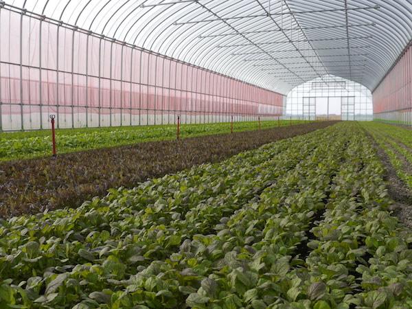 地域で野菜を自給。まちづくりベンチャーの農場「IRODORI FARM」