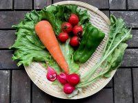 初心者向け野菜総選挙!育てやすさのポイントとは?【枯れ専かーちゃんのベランダ菜園】