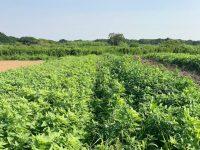 自然栽培農家が語る「理想」と「現実」【前編】