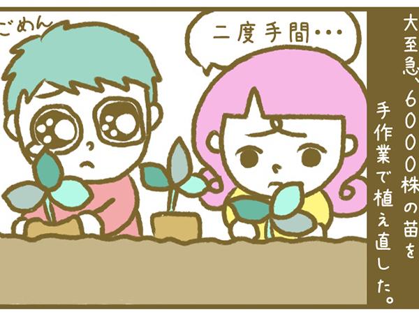 漫画「宮崎に移住した農家の嫁日記」【第30話】手抜き定植