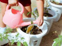 枯れるのは水やりが原因?プランター菜園の正しい水やり【畑は小さな大自然vol.12】