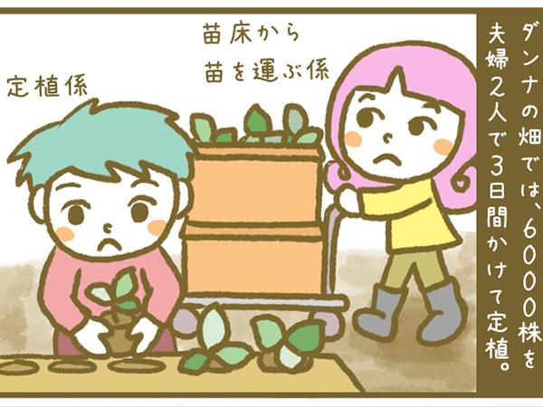 漫画「宮崎に移住した農家の嫁日記」【第29話】いちごの定植