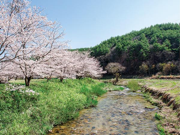 【福島県双葉郡川内村】ブドウの産地化に向けたワイナリー建設など、意欲的な動きが展開中。