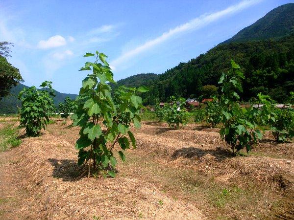 耕作放棄地を果樹の里に! 鳥取県からの実践レポ