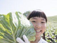 キャベツの栽培方法、栽培時期は? 害虫や葉が巻かないなどの悩みも解決