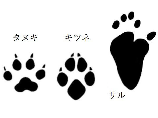 タヌキ・キツネ・サル