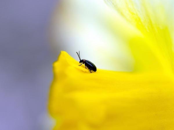 害虫に振り回されない!効果的な予防法と対処法【畑は小さな大自然vol.15】