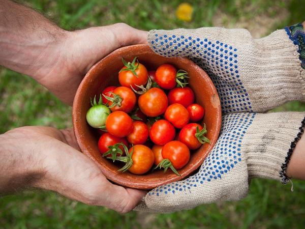 【農業マーケティングの現場からVol.2】生活者には「オススメ」と「クチコミ」が必要