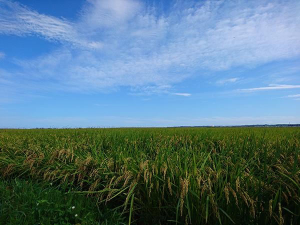 【福島県相馬市】仙台市からのアクセス抜群。元気な若手就農者による新たな取り組みも展開