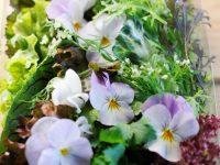 生花に減農薬・無農薬を広げたい! 生花店わなびやの挑戦
