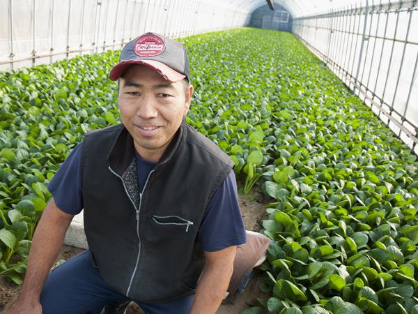 デンカの石灰窒素で地力回復 費用対効果に優れた肥料・農薬・土づくりの3役