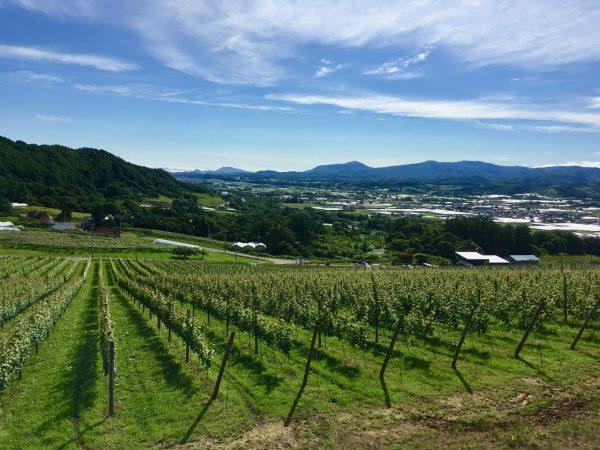 【1/26イベント開催】北海道随一のフルーツの里・仁木町でワイン醸造家の道も