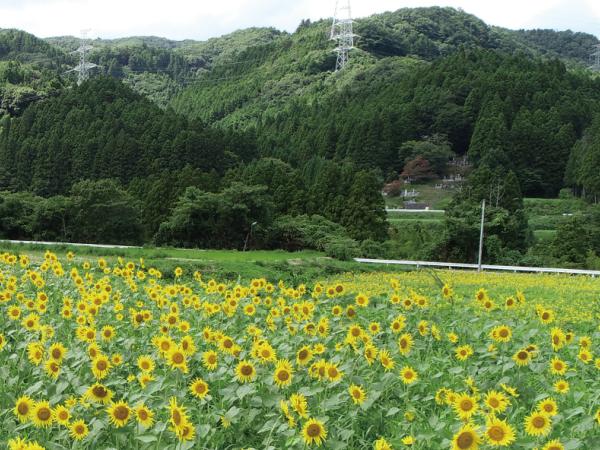 【福島県大熊町】最新設備を備えた大型のイチゴ植物工場を建設中。復興への新たなスタートをイチゴにかける。
