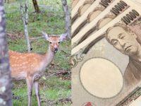 狩猟にかかるお金はどれぐらい? 免許取得代や銃・装備品の値段は?