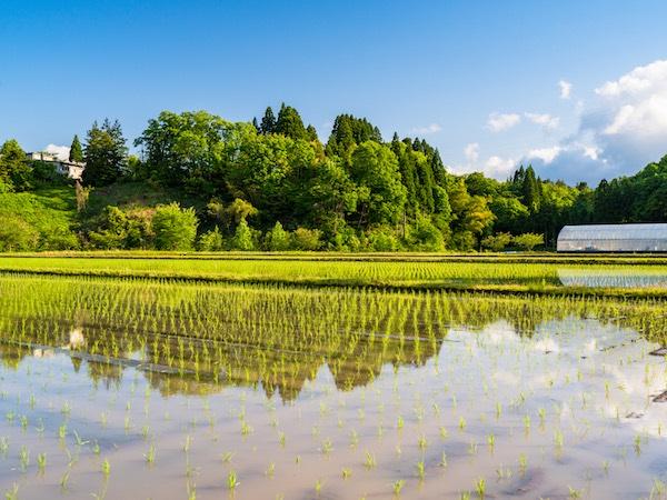 湛水(たんすい)とは? 湛水直播栽培から被害を未然に防ぐ湛水防除まで