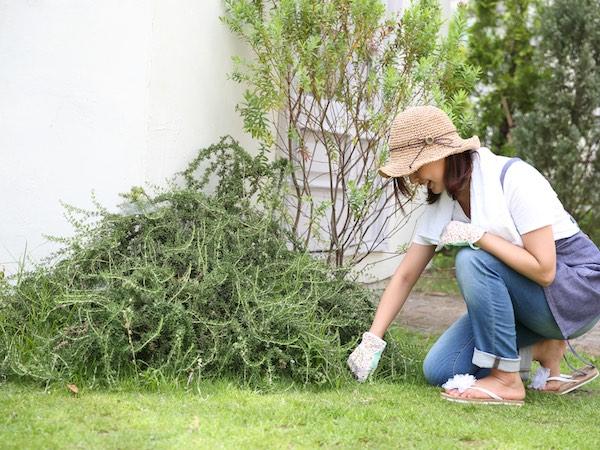 雑草対策に有効な工夫とは? 手軽に使える道具とその使い方を紹介